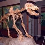 Paleontologia Empoli
